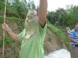 Jual Umpan Pancing Untuk Danau umpan mancing mujair danau tambak rawa 2018 mancing ikan