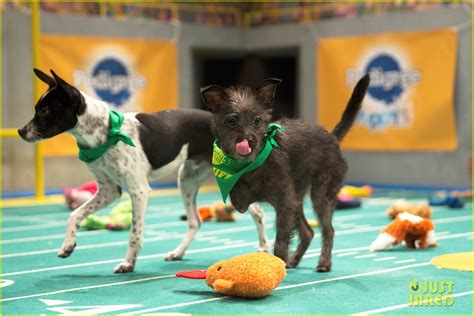 what is the puppy bowl puppy bowl 2017 meet the dogs the more photo 3853443 2017