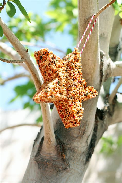 summer c bird feeders design dazzle