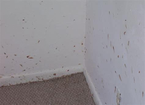 Termites In Toronto Map