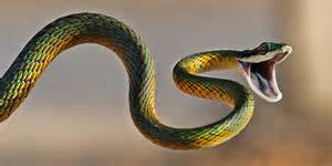 colorful snake colorful snakes olive s animals