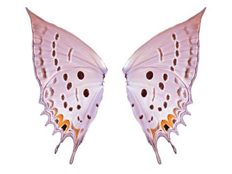 imagenes png mariposas mariposas png para photoshop imagui