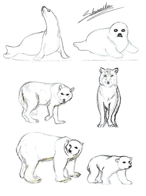 Tundra Animals Coloring Pages click the american marten coloring pages coloring pages