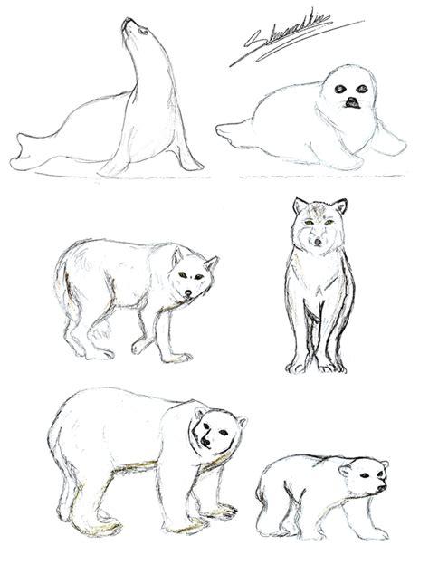 how to draw tundra animals