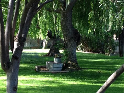 Serenity Gardens Bed And Breakfast by Chickens Picture Of Serenity Gardens Bed And Breakfast Merced Tripadvisor