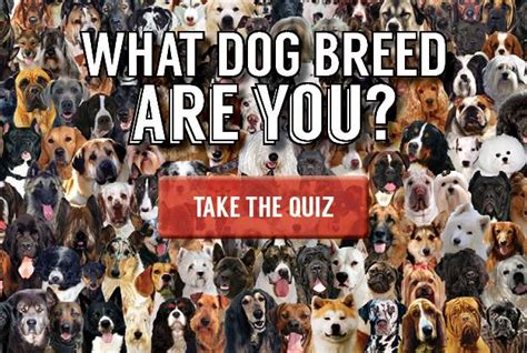 what breed is right for me quiz breed quiz what breed is right for me pioneer settler