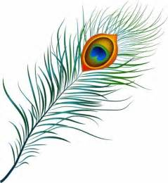 Free peacock vector layout top peacock feather drawing vector graphic