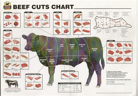 beef cuts diagram 16 best images on beef cuts chart