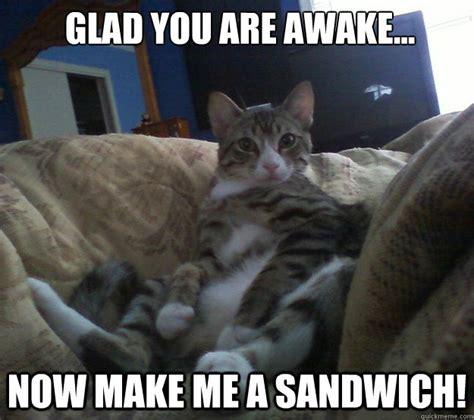 Make Me A Sandwich Meme - make me a sandwich animals pinterest