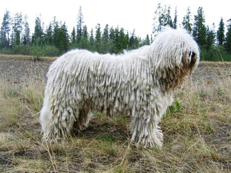 25 Of The World's Largest Dog Breeds You'll Want To Own