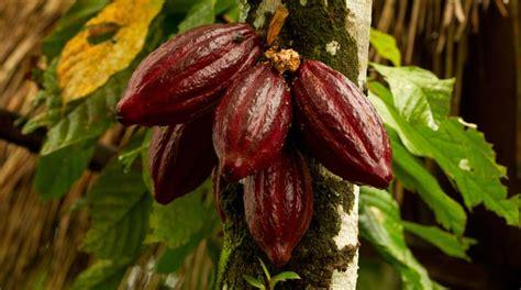 herba bagoes makanan sehat alami