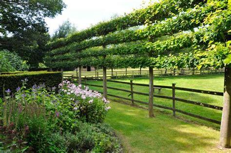 city and guild walled garden espalier trees for every garden garden design