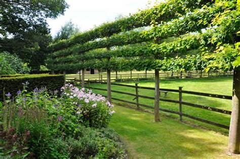 Espalier Trees for Every Garden   Garden Design