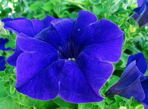 Blue Flower Desktop Wallpapers This Wallpaper Blue Flower