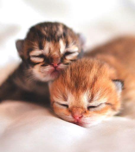 Baby Cat best 25 newborn kittens ideas on kittens