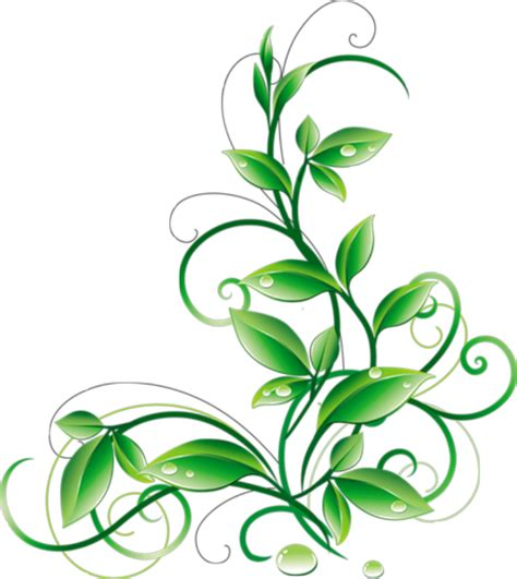 green leaves png image veerendra vijaya pinterest floral green leaves and water droplets png clipart