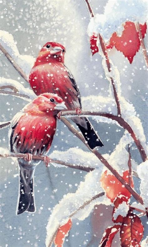 snow birds  wallpaper apk   android