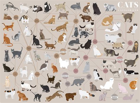 types of cats new pop chart lab poster cat egorizes your favorite felines mental floss