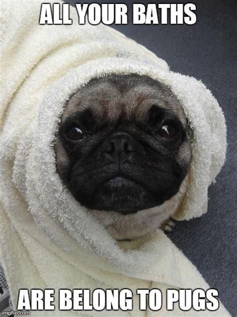 Pug Birthday Meme - happy birthday pug meme 28 images 25 best ideas about