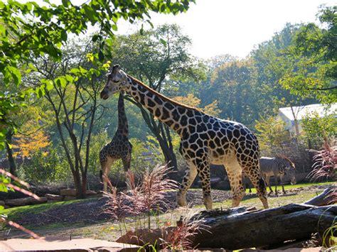 Zoologischer Garten Magdeburg Ggmbh by Zoo Magdeburg Touristische Informationen 252 Ber Magdeburg