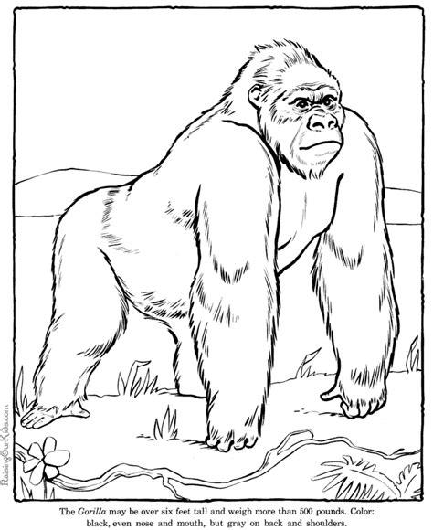 coloring page of a gorilla koko the gorilla black and white coloring sheet gorilla