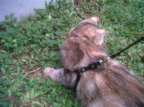 Keranjang Kucing jual tali rantai kucing dan anjing baru aksesoris hewan
