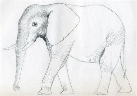 Sketches Easy To Draw by How To Draw An Elephant