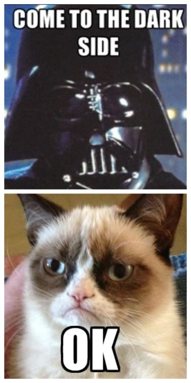 Cat Memes Tumblr - grumpy cat meme on tumblr
