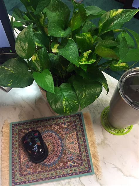 plant on desk 4 steps to being more productive at work