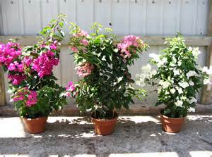 Indoor Flowering Plants No Sunlight Gallery For Gt Indoor Flowering Plants No Sunlight