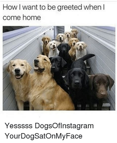 how i want to be greeted when i come home yesssss