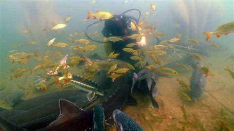 natura gart unterwasser ibbenb 252 ren naturagart
