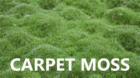 moss rug live moss carpet diy carpet review