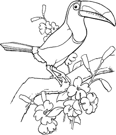 Tropical Bird Coloring Pages free tropical bird coloring pages