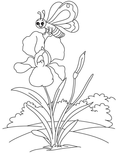 coloring page iris butterfly at iris coloring page free butterfly