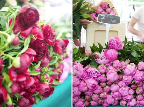 peonies in season peony season in paris
