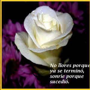 Imagenes de rosas con frases bellas para conquistar imagen de rosas