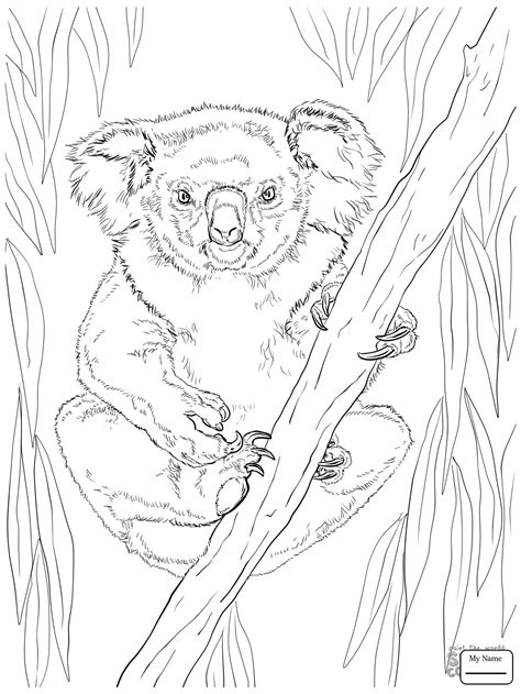 printable eucalyptus leaves baby and mother koala coloring pages koala coloring page