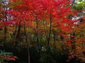 fall foliage stock images naper design naperville design seo