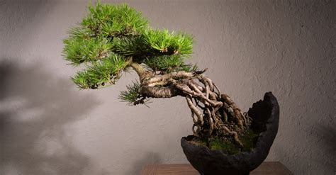 tree meaning japanese of growing a miniature tree symbolism and