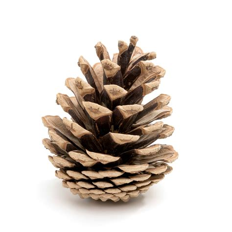 pine cone fire starters chesterfield lifestyle magazine