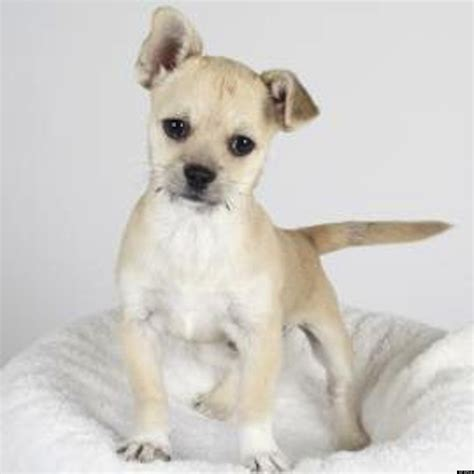 spca puppies stolen spca puppy found safe in san francisco photos