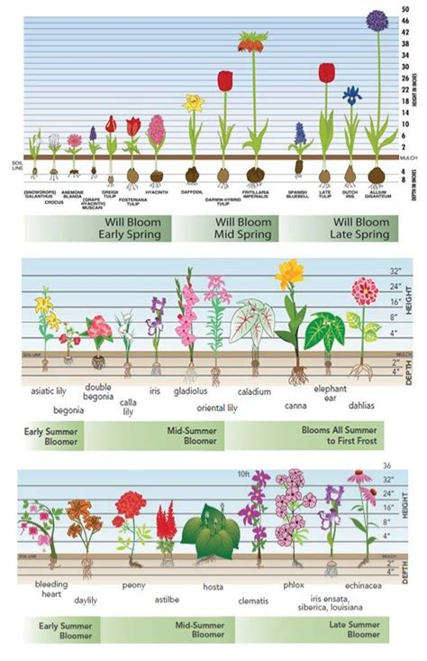 blumenzwiebeln pflanzen zeitpunkt bloom time charts for fall planted bulbs planted