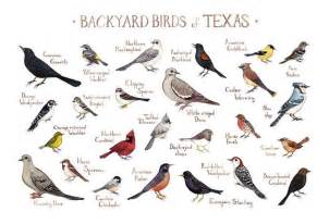 north american backyard birds 25 best ideas about texas landscaping on pinterest