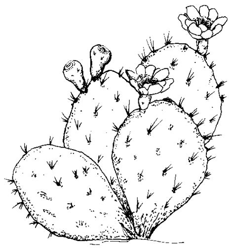 Galerry cactus flower coloring page
