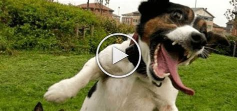 dogs who fail at being dogs dogs fail at being dogs hilarious doggies care