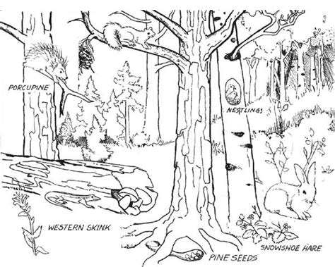 forest  animals  coloring page coloring sky