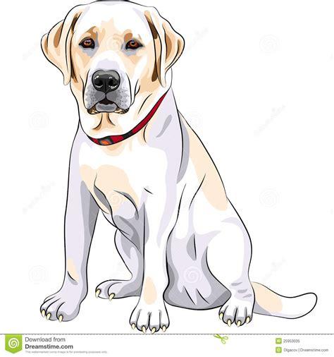 free labrador retriever clipart clipartfest labrador retriever dog clipart labrador