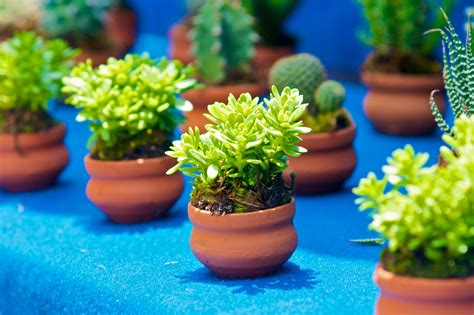Little Plants | get garden ready at the spring plant sale