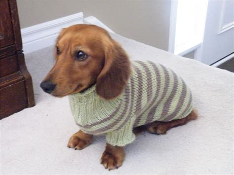 knitting pattern for dog sweater dog sweater knitting pattern dachshund dacshund drool